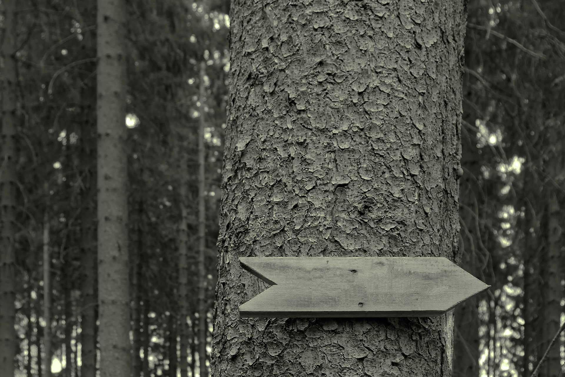 Baum mit Schild als Pfeil